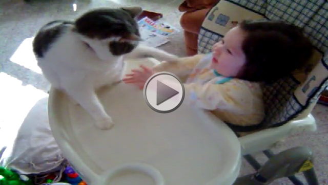 Cat Sucker-punching a Baby