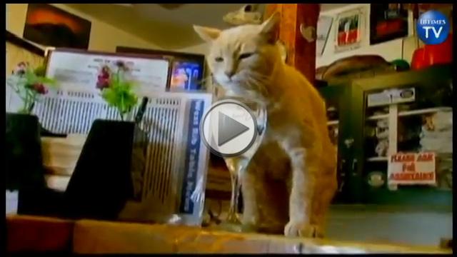 Spotlight on the longest serving Mayor in Alaska – Stubbs the Cat